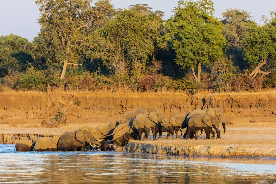 Image result for Luangwa National Park