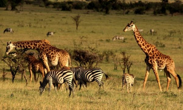 Image result for Masai Mara